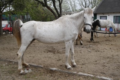 cal abandonat bianca 05