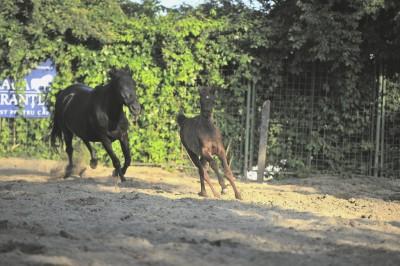 cal-abandonat-blacky-zara-01