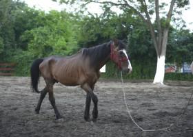 cal-abandonat-marcel-02