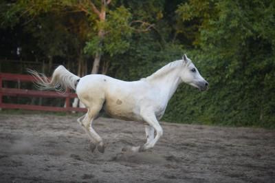 cal-abandonat-rashid-el-zorab-11